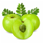 มะขามป้อม - Phyllanthus emblica